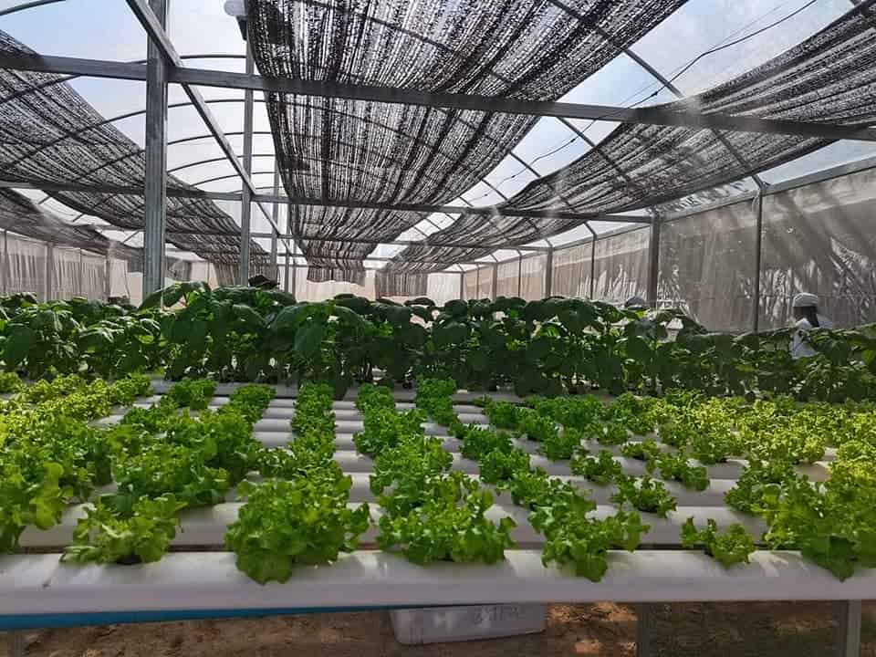 Together Project Greenhouse in Bakong